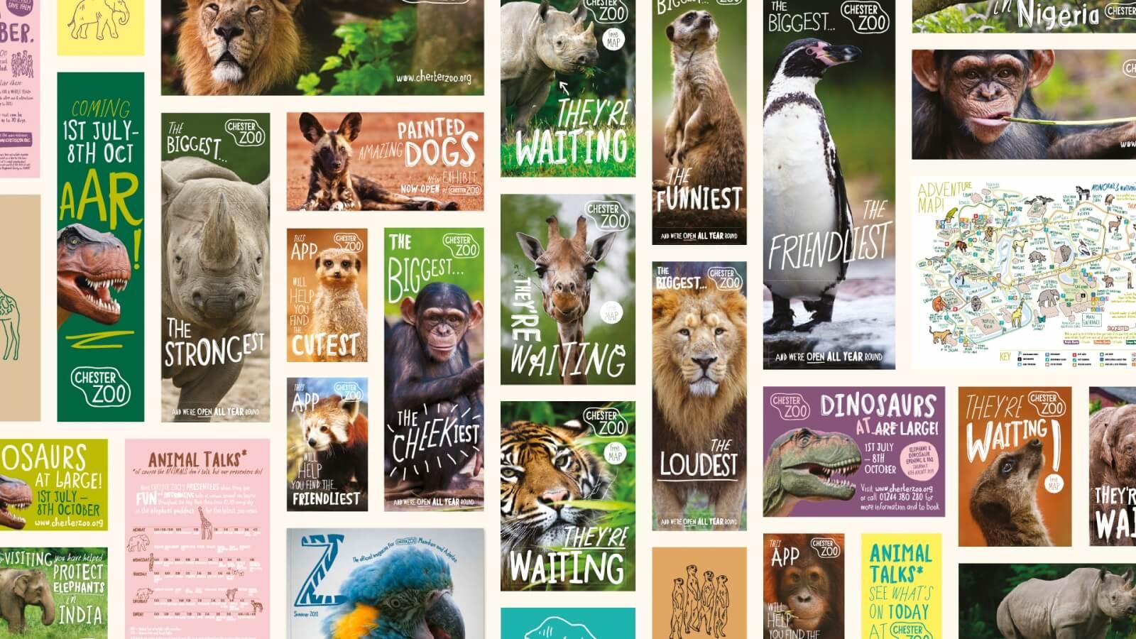 Chester Zoo Rebrand Music